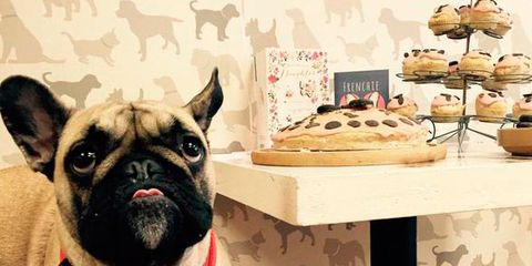 Dog, Vertebrate, Carnivore, Cuisine, Collar, Snout, Finger food, Baked goods, Working animal, Dog breed,