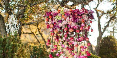 Petal, Flower, Tablecloth, Pink, Garden, Shrub, Magenta, Cut flowers, Floristry, Flower Arranging,