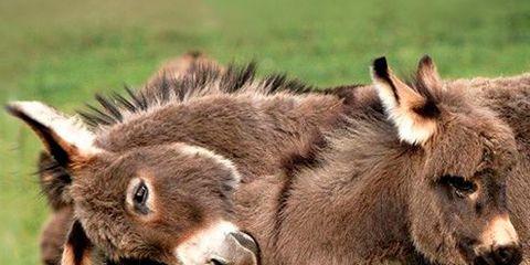 Skin, Vertebrate, Terrestrial animal, Snout, Adaptation, Wildlife, Organ, Ecoregion, Plain, Pasture,