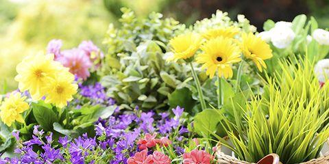 Flowerpot, Plant, Flower, Petal, Purple, Flowering plant, Botany, Garden, Floristry, Lavender,