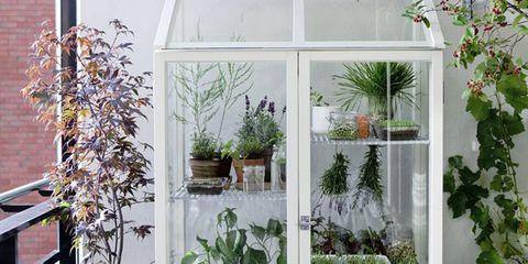 Flowerpot, Plant, Interior design, Fixture, Houseplant, Annual plant, Herb, Perennial plant, Basket, Greenhouse,