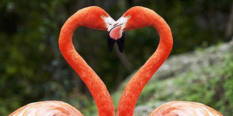 Organism, Flamingo, Beak, Bird, Natural landscape, Red, Orange, Greater flamingo, Pink, Summer,