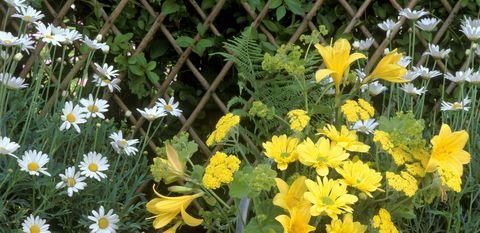 Flowerpot, Plant, Yellow, Flower, Petal, Flowering plant, Houseplant, Shrub, Interior design, Garden,