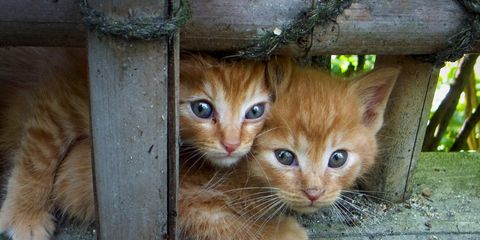 Wood, Organism, Whiskers, Vertebrate, Carnivore, Felidae, Cat, Small to medium-sized cats, Iris, Terrestrial animal,