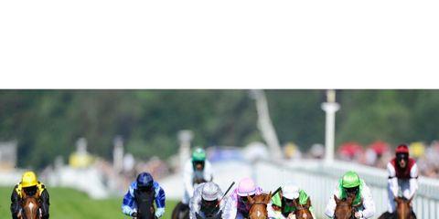 Jockey, Bridle, Horse, Halter, Animal sports, Rein, Horse tack, Horse supplies, Working animal, Sports,