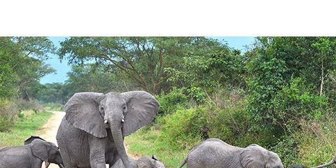 Elephant, Elephants and Mammoths, Natural landscape, Organism, Vertebrate, Terrestrial animal, Plant community, Nature reserve, Landscape, Working animal,