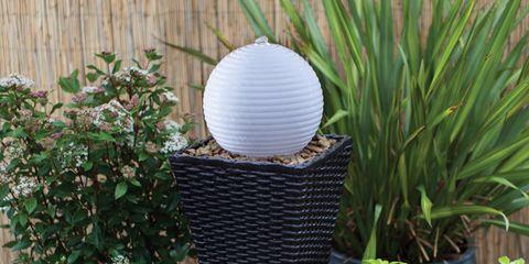 Flowerpot, Hardwood, Interior design, Wood flooring, Herb, Shrub, Laminate flooring, Sphere, Houseplant, Annual plant,