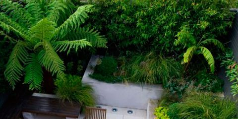 Plant, Property, Garden, Outdoor furniture, Shrub, Terrestrial plant, Backyard, Yard, Home, Courtyard,