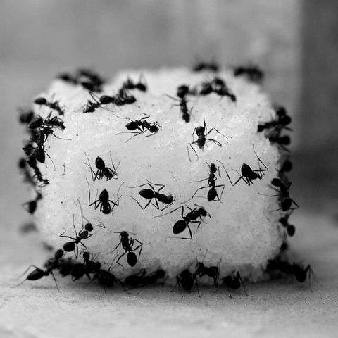 How to get rid of ants in the house - pest control tips