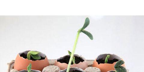 Flowerpot, Leaf, Botany, Interior design, Houseplant, Annual plant, Pottery, Plant stem, Compost, Herb,