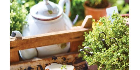 Food, Finger food, Serveware, Cuisine, Ingredient, Dishware, Dish, Plate, Recipe, Porcelain,