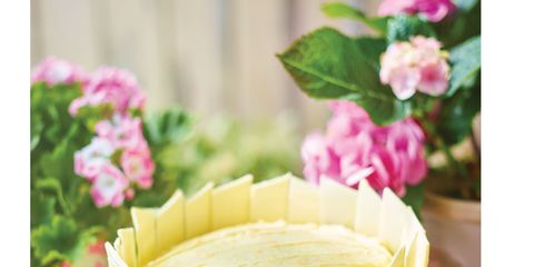 Serveware, Petal, Dishware, Flower, Pink, Saucer, Teacup, Coffee cup, Cup, Flower Arranging,