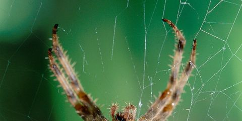 Nature, Organism, Green, Natural environment, Arthropod, Invertebrate, Insect, Spider, Photograph, Terrestrial animal,