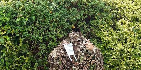 Shrub, Groundcover, Military camouflage, Camouflage, Hedge, Environmental art, Lawn,
