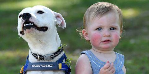 Nose, Blue, Dog breed, Dog, Carnivore, Collar, Mammal, Vertebrate, Child, Baby & toddler clothing,