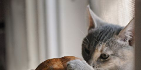 Brown, Whiskers, Carnivore, Small to medium-sized cats, Dog breed, Snout, Felidae, Cat, Iris, Dog,