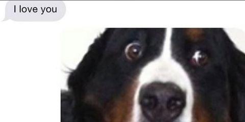 Brown, Dog breed, Dog, Carnivore, Bernese mountain dog, Snout, Iris, Terrestrial animal, Canidae, Companion dog,