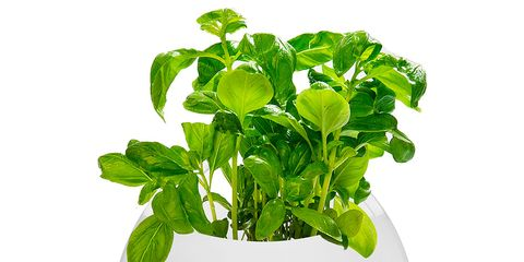 Leaf, World, Herb, Annual plant, Flowerpot, Circle, Houseplant, Sphere, Herbal, Herbaceous plant,