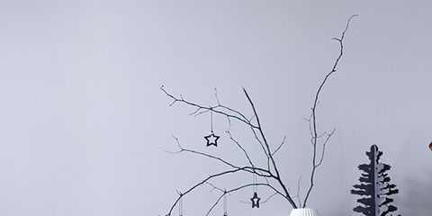 Branch, Twig, Room, Living room, Couch, Furniture, Wall, Pillow, Throw pillow, Interior design,