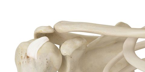White, Beige, Natural material, Tooth, Bone,