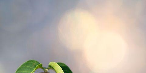 Ingredient, Natural foods, Whole food, Coconut, Produce, Recipe, Nut, Superfood, Prunus, Walnut,