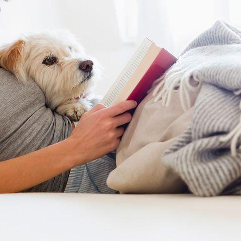 Dog, Mammal, Canidae, Dog breed, Maltese, Companion dog, Puppy, Puppy love, Carnivore, West highland white terrier,