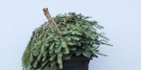 Leaf, Flowerpot, Botany, Groundcover, Deciduous, Pebble, Shrub, Rubble, Plant stem, Autumn,