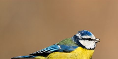 Blue, Vertebrate, Bird, Beak, Adaptation, Organ, Terrestrial animal, Beauty, Azure, Feather,