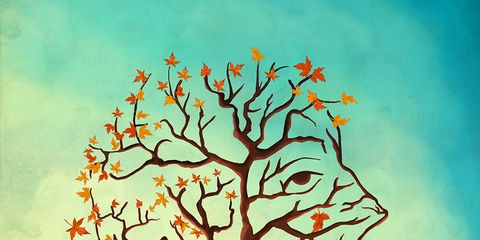 Branch, Leaf, Orange, Colorfulness, Twig, Amber, Deciduous, Art, Woody plant, Trunk,