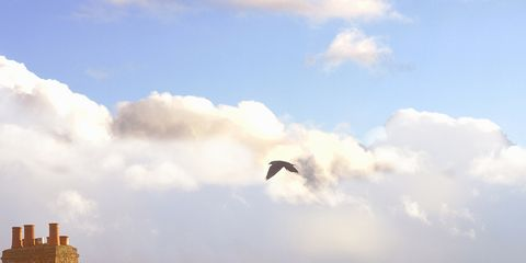 Sky, Window, Brown, Cloud, Property, Bird, House, Roof, Residential area, Home,