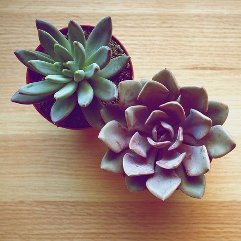 Best indoor plants and how to care for them on fruit japanese, mushrooms japanese, flowers japanese,