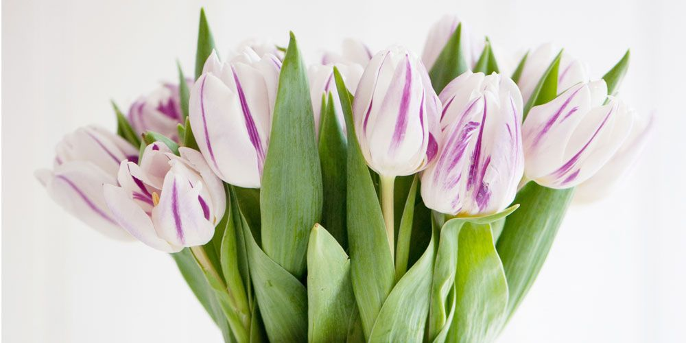 How To Keep Your Tulips Drooping