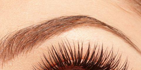 Brown, Skin, Eyelash, Eyebrow, Iris, Amber, Colorfulness, Organ, Beauty, Violet,
