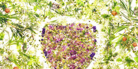 Purple, Art, Lavender, Painting, Illustration, Graphics, Drawing, Stemware,