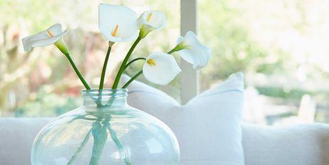 White, Yellow, Table, Flower, Room, Plant, Vase, Furniture, Houseplant, Interior design,