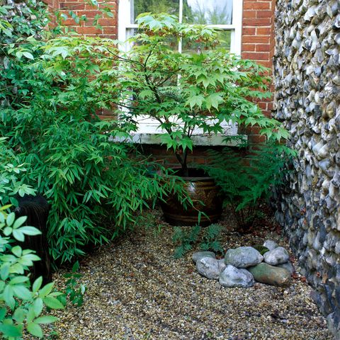 small ferns a potted maple and raked shingle echo a japanese garden picture getty - Small Japanese Garden