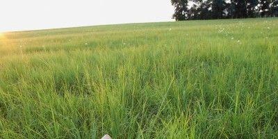 Grass, Electronic device, Plain, Laptop part, Natural landscape, Field, Summer, Grassland, Laptop, Land lot,