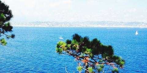 Vegetation, Natural landscape, Water, Coastal and oceanic landforms, Ocean, Azure, Tropics, Sea, Trunk, Coast,
