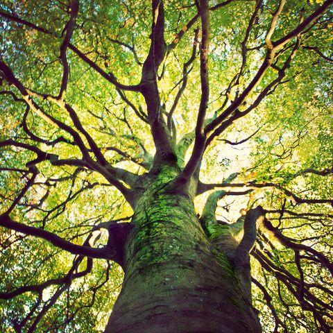 Direction générale, vert, jaune, feuille, arbre, rameau, feuillus, plante ligneuse, teintes et nuances, forêt,