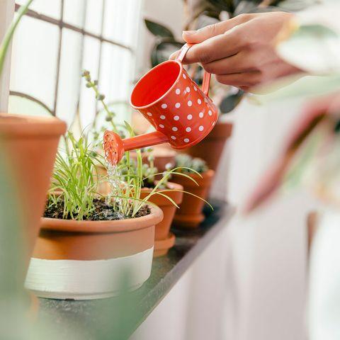 Pot de fleurs, design d'intérieur, pêche, tasse, plante d'intérieur, service, poterie, tasse à café, faïence, vase,