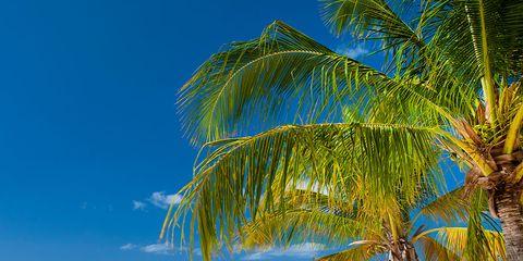 Body of water, Coastal and oceanic landforms, Ocean, Shore, Aqua, Beach, Summer, Turquoise, Tropics, Arecales,