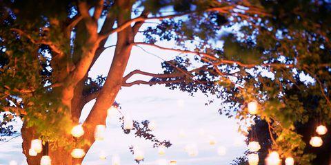 Branch, Orange, Twig, Deciduous, Trunk, Autumn,