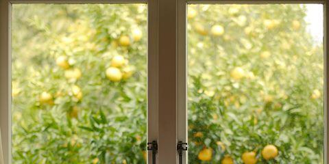 Yellow, Produce, Citrus, Fruit, Glass, Fixture, Mandarin orange, Rangpur, Valencia orange, Orange,