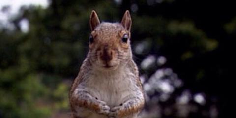 Grass, Daytime, Skin, Organism, Squirrel, Vertebrate, Photograph, Rodent, Facial expression, Grey squirrel,
