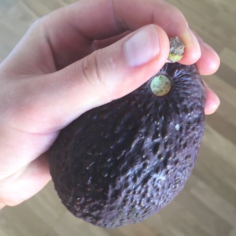 Ripe Avocado Pictures
