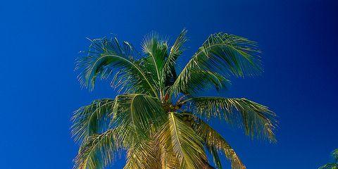 Body of water, Coastal and oceanic landforms, Coast, Shore, Tree, Ocean, Beach, Summer, Tropics, People on beach,