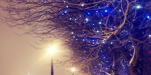 Branch, Winter, Lighting, Event, Tree, Freezing, Street light, Public space, Atmospheric phenomenon, Woody plant,