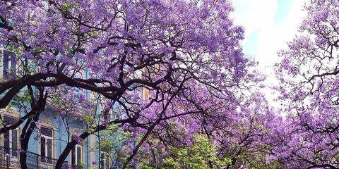 Wheel, Branch, Road, Neighbourhood, Street, Purple, Road surface, Tree, Town, Flower,
