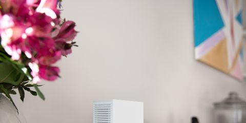 Petal, Flower, Centrepiece, Interior design, Cut flowers, Vase, Artifact, Flower Arranging, Bouquet, Home appliance,