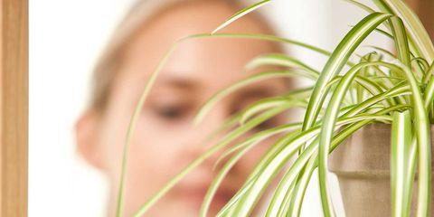 Plant, Vegetable, Organism, Room, Flower, Food,